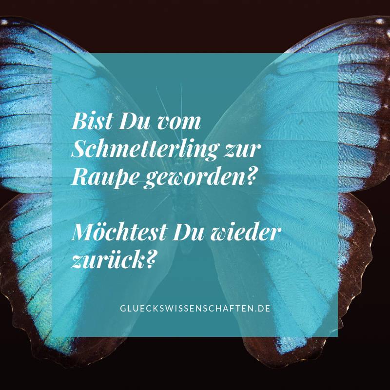 Bist Du vom Schmetterling zur Raupe geworden?