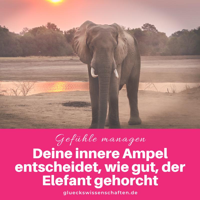 Glückswissenschaften - Anleitung Gefühle managen - Willst Du was erreichen- Deine innere Ampel entscheidet wie gut der Elefant gehorcht
